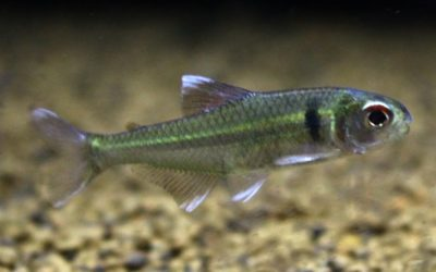 ブリコナメリクス ホワイトチップ リオジュルエナ