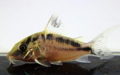 LNエヴェリナエ コロンビア(6)